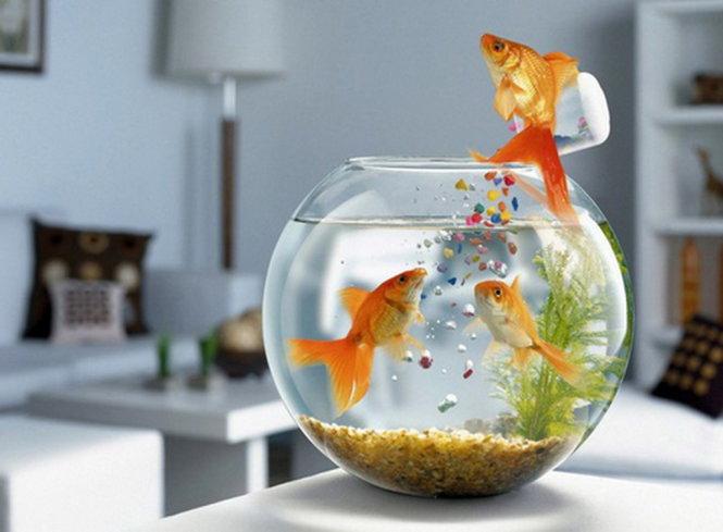 3 lưu ý khi đặt bể cá trong phòng làm việc